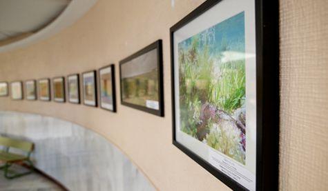 Exposición Fotografía Básica de la Naturaleza