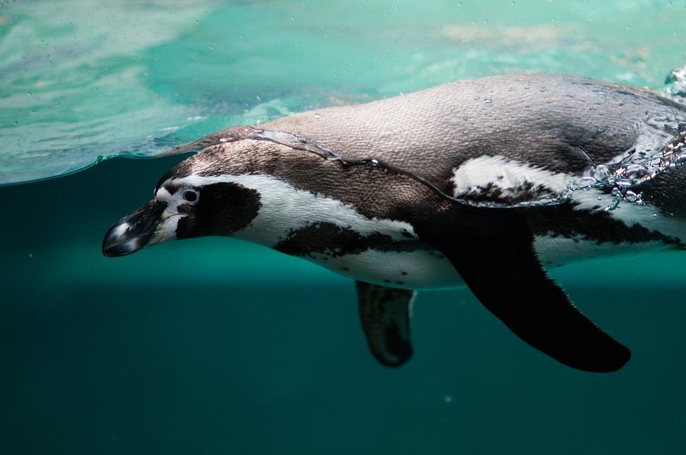 Aula Antártica UCA